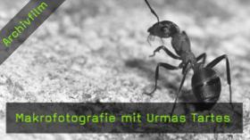 makrofotografie-urmas-tartes-naturfotografie
