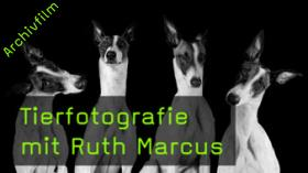 ruth-marcus-tierfotografie-naturfotografie-hunde