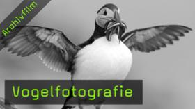vogelfotografie-naturfotografie