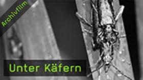 209-unter-kaefern-teaser-k.jpg