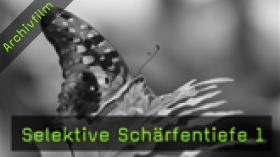 makrofotografie-schaub-naturfotografie