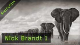 Nick Brandt, Naturfotografie, Tierfotografie