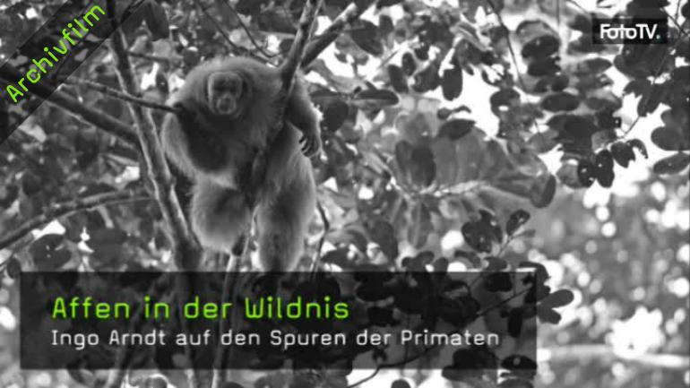 Ingo Arndt im Interview über Affenfotografie